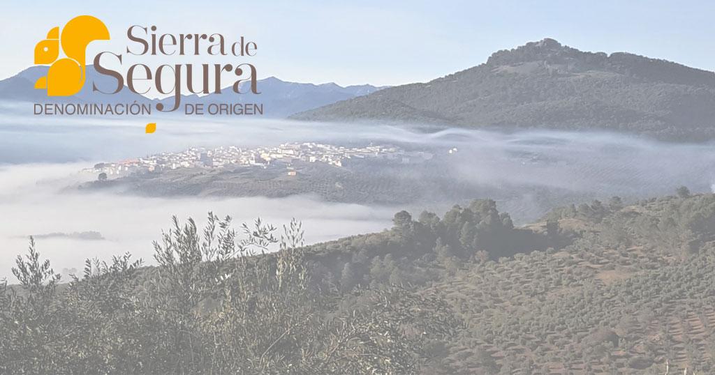 aceite oliva do Sierra Segura